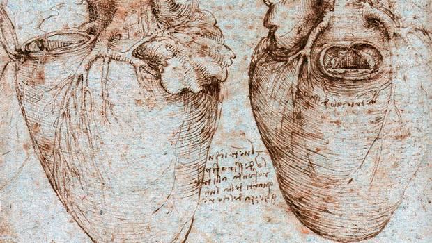 Los sorprendentes dibujos del corazón de Leonardo da Vinci