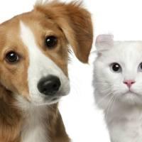 Abre primera tienda para perros y gatos con capacidades diferentes